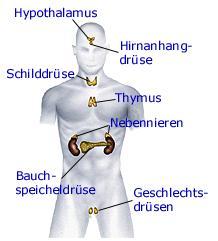 Sexueller Missbrauch beeinflusst die Funktion der Hypophyse